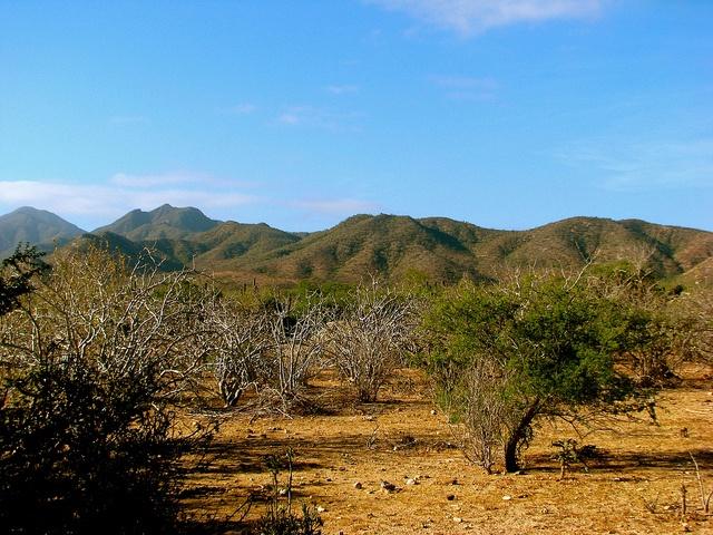 Desert Park Natural Reserve